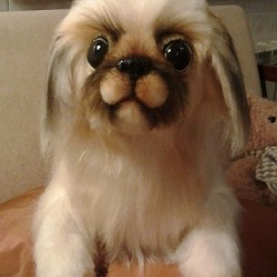 Pechinese soft toy dog You send us image we make a custom soft toy for you!