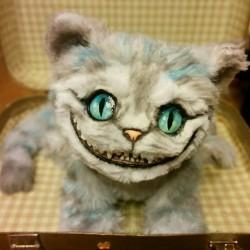 Cheshire-cat-1